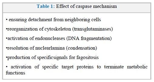 Trauma-induced Apoptosis of Endothelial Cells