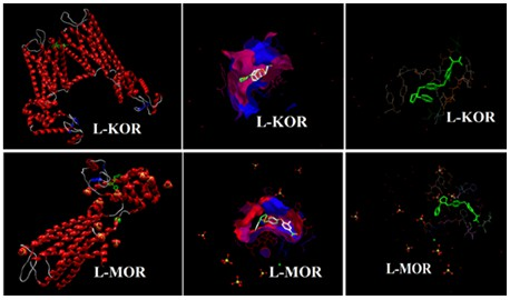 Exploring molecular docking and electronic studies of [11C]LY2795050 as a novel antagonist tracer for positron emission tomography (PET) scan of the kappa (κ) and mu (µ) opioid receptors (KOR and MOR)