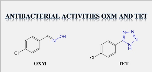 Study of the antibacterial effect of 5-(4-chlorophenyl)-1H-tetrazole and its oxime precursor against strains isolated from the hospital environment