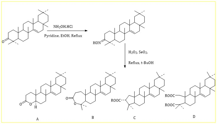 Transformative reaction on triterpenoids: action of hydrogen peroxide in presence of selenium dioxide on oxime derivative of taraxerone and antimicrobial activity of isolated compounds